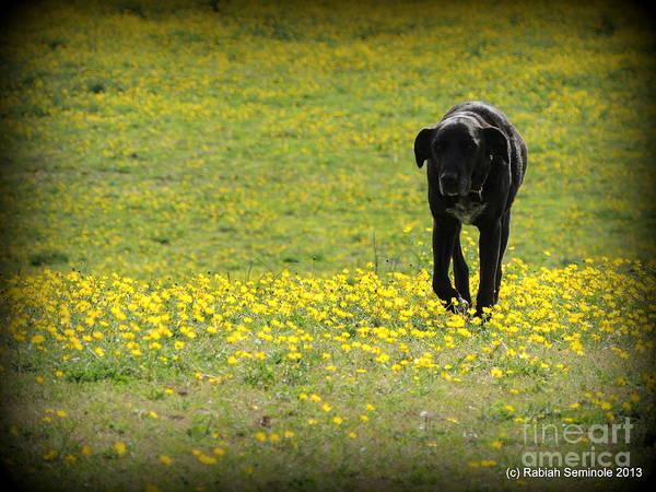 Cody In Black And Yellow Art Print