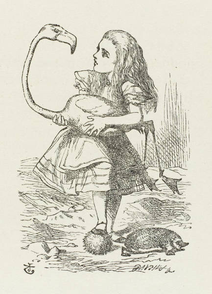 Flamingo Drawing -  Croquet  Alice With The Flamingo by Mary Evans Picture Library