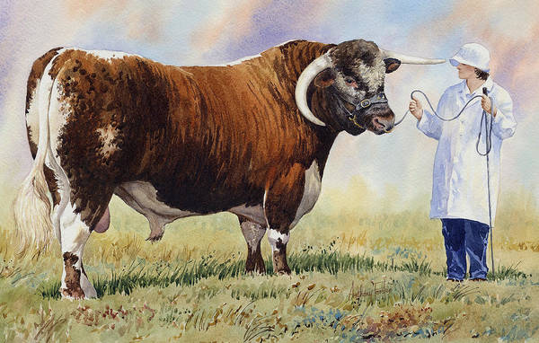 English Longhorn Bull Art Print by Anthony Forster