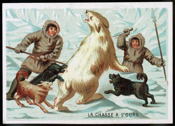 Polar Bear Drawing -  Eskimos Hunting A Polar Bear by Mary Evans Picture Library
