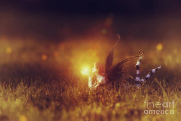 Golden Gardens Photograph -  Faerie Light  by Tim Gainey