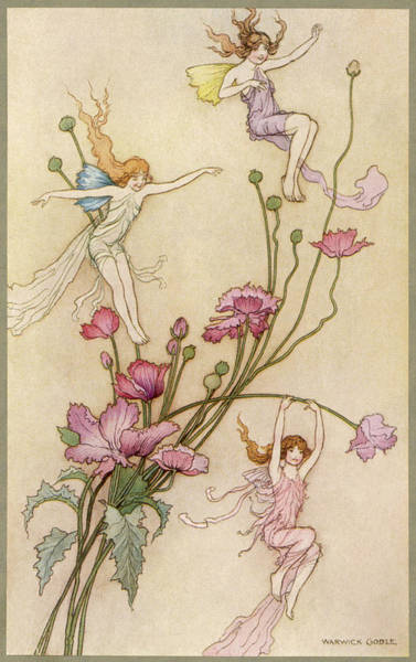 Folklore Drawing -  Fairies And Flowers by Mary Evans Picture Library