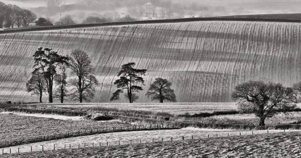 Photograph -  Fields And Trees by Pete Hemington