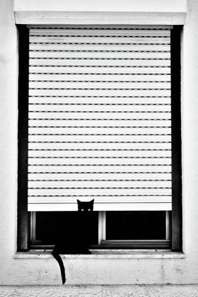 Cat Eyes Wall Art - Photograph - ? by Florentinus Joseph