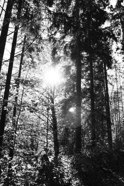 Forest Art Print by Falko Follert