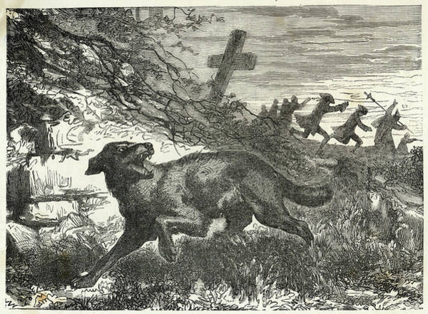 Folklore Drawing -  French Villagers Hunt A  Werewolf by Mary Evans Picture Library