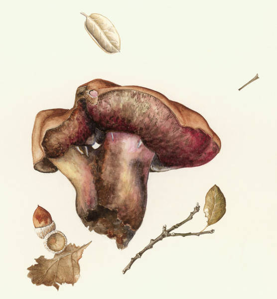 Wall Art - Painting -  Fungus by Alison Cooper