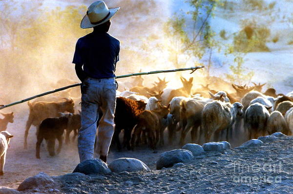 Sheep Rock Wall Art - Photograph -  Herder Going Home In Mexico by Phyllis Kaltenbach