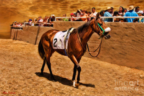 Photograph -  Horse Cava Kavia And His Fans by Blake Richards