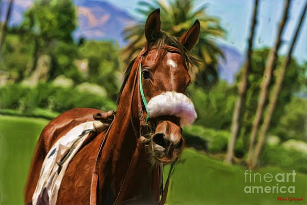 Photograph -  Horse Cava Kavia by Blake Richards