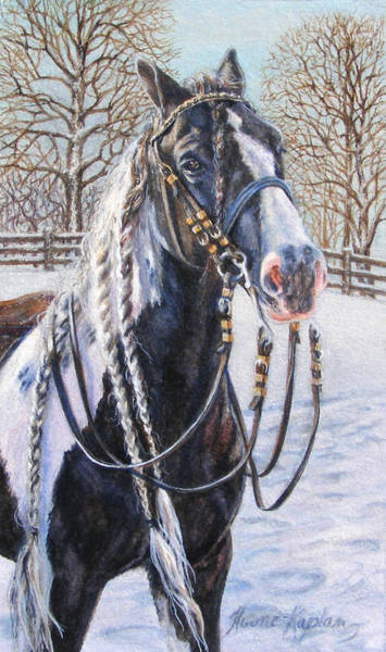 I'm Ready For The Ribbons Gypsy Vanner Horse Art Print