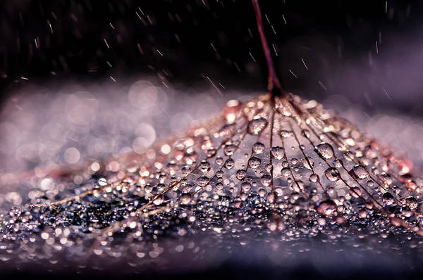 Drop Photograph - ''\ by Ivelina Blagoeva