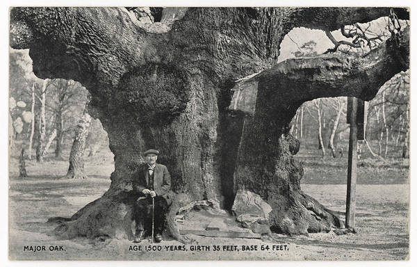 Wall Art - Photograph -  Major Oak  A Huge Oak Tree Believed by Mary Evans Picture Library