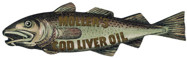 Wall Art - Drawing -  Muller's Cod Liver Oil         Date by Mary Evans Picture Library