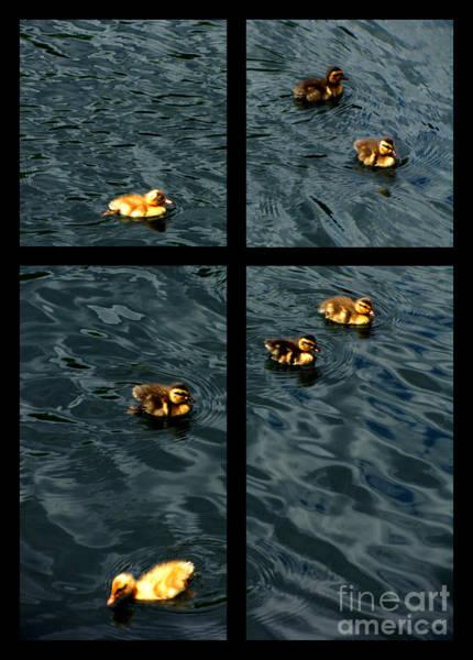 Wall Art - Digital Art -  On Golden Duck Pond by Peter Piatt