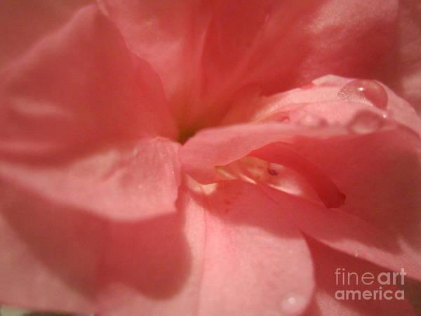 Azalia Photograph -  Pink Azalia Abstract by Tara  Shalton