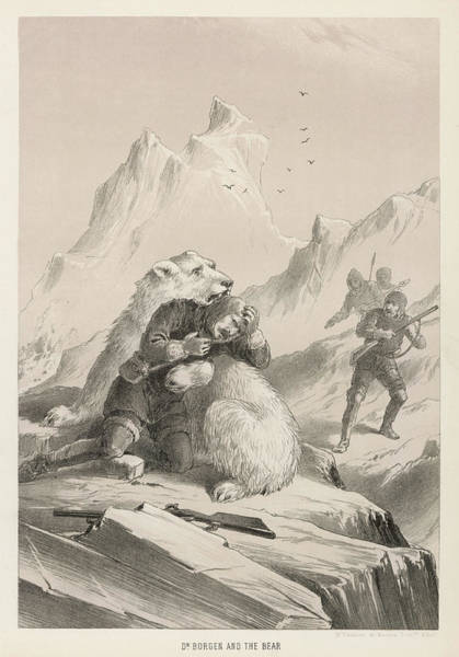 Polar Bear Drawing -  Polar Bear Seizes Dr by Mary Evans Picture Library
