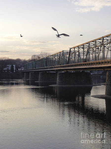 Photograph -  Gulls At The Bridge In January by Christopher Plummer