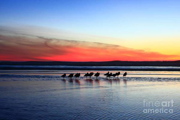 Photograph -  Shorebird Sunset by John F Tsumas