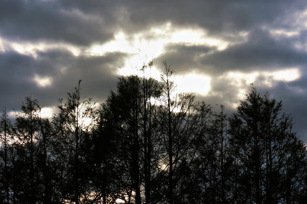 Photograph -  Silhouettes Toward Sunset by Denise Beverly