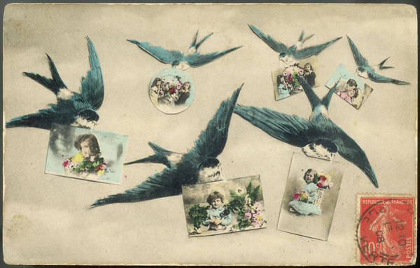 Wall Art - Drawing -  Six Swallows Delivering  Postcards by Mary Evans Picture Library