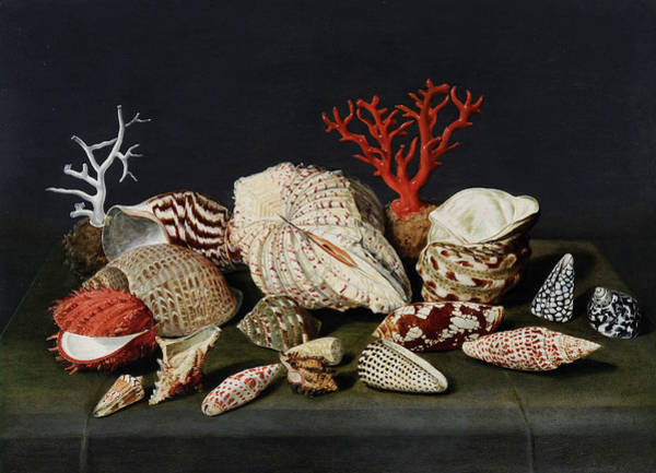 Wall Art - Painting -  Still Life With Shells And Coral by Jacques Linard