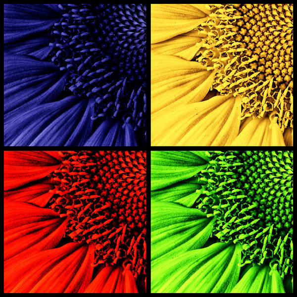 Photograph -  Sunflower Medley by Mark Kiver