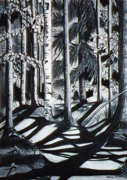 Drawing -  Take The Maine Path by Stella Sherman
