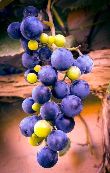 Wild Grape Photograph -  Taste Of Nature by Karen Wiles