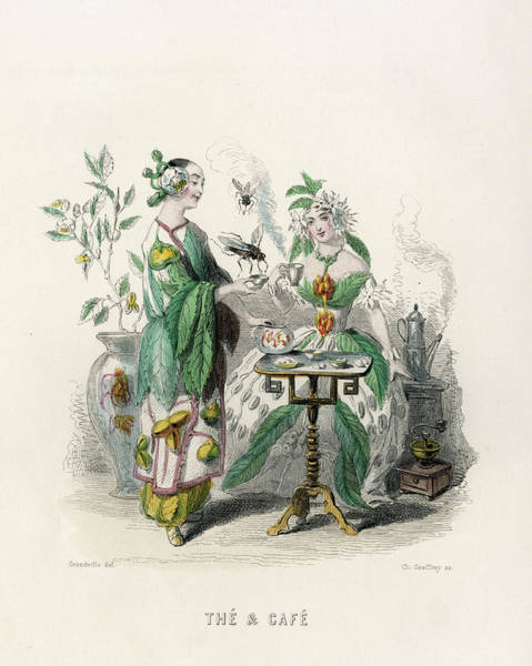 Wall Art - Drawing -  Tea And Coffee         Date 1847 by Mary Evans Picture Library
