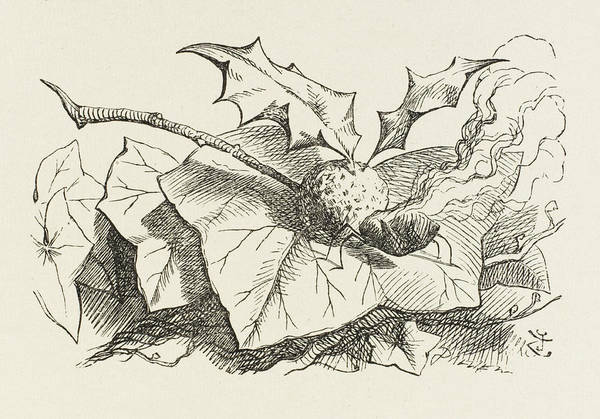 Snap Dragons Wall Art - Drawing -  The Snap-dragon-fly With The Body by Mary Evans Picture Library