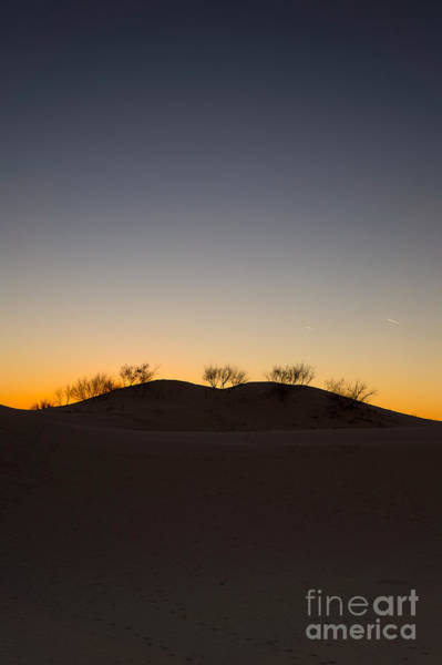 Wall Art - Photograph -  The Trees On The Top Of A Sand Dune by Ellie Teramoto