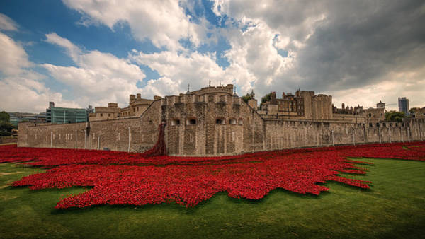 Wall Art - Photograph -   Tower Of London Remembers.  by Ian Hufton