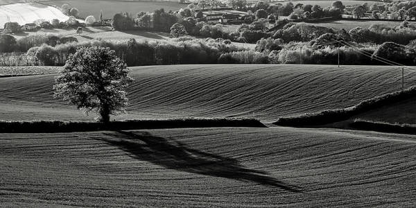 Photograph -  Tree And Shadow by Pete Hemington