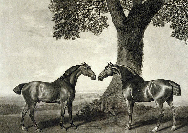 Rural Drawing -  Two Hunters  by GT Stubbs