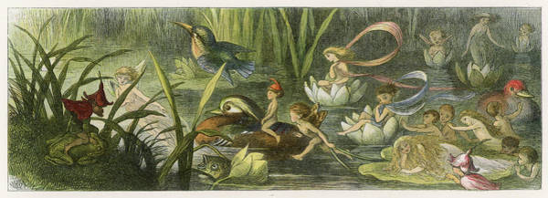 Folklore Drawing -  Water-lillies And Water  Fairies by Mary Evans Picture Library