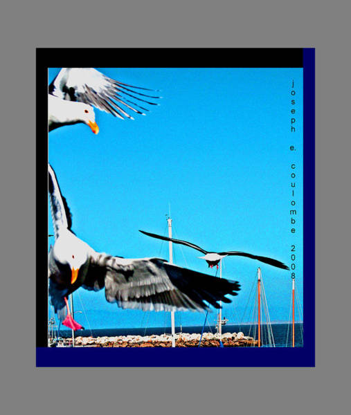 Digital Art -  West Coast Sea Birds by Joseph Coulombe