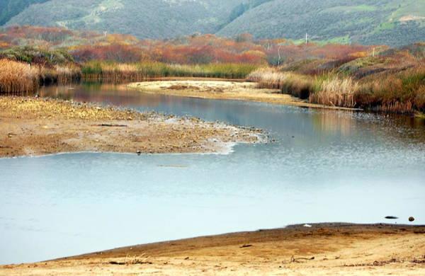 Photograph -  Wetlands Of Scott Creek by AJ  Schibig