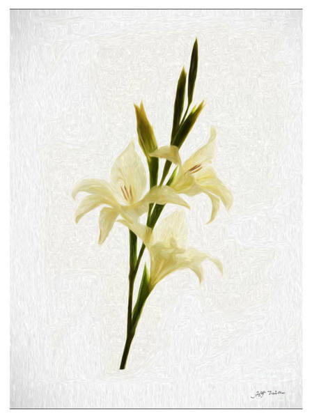 Wall Art - Painting -  White Gladiolus Mixed Media Painting by Heinz G Mielke