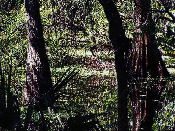 Bald Cypress Digital Art - 03032015 Southern Marsh Digital Pastel by Garland Oldham