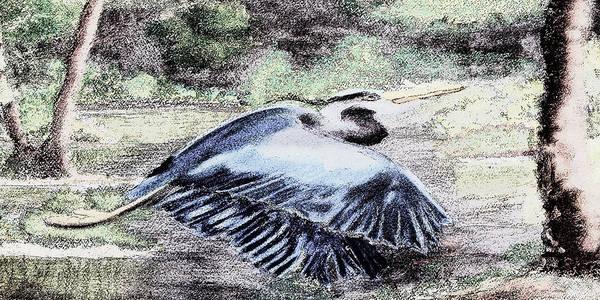Digital Art - 091714 Graphic Pen Blue Heron by Garland Oldham