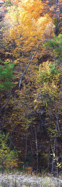 Ontario Mixed Media -  Vertical Panorama Fall Colors Trees Lion River Creek Trail Oakville Ontario Canada  Photography Dig by Navin Joshi