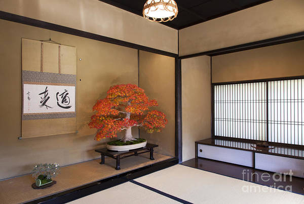 Photograph -  Alcove With A Bonsai by Tad Kanazaki