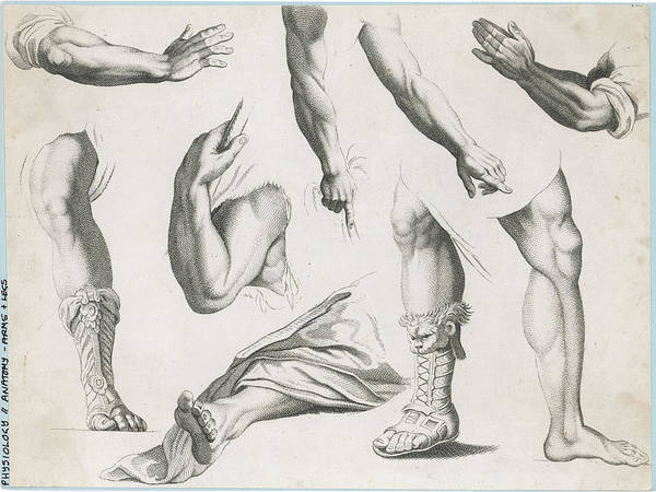 Wall Art - Drawing -  An Assortment Of Hands And  Feet - by Mary Evans Picture Library
