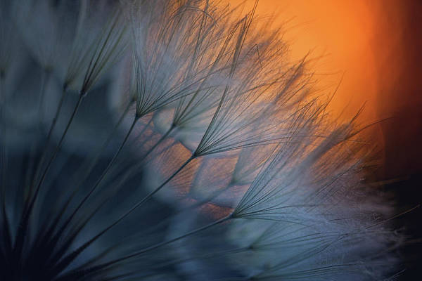 Feathers Photograph - ///<*... by Dimitar Lazarov -
