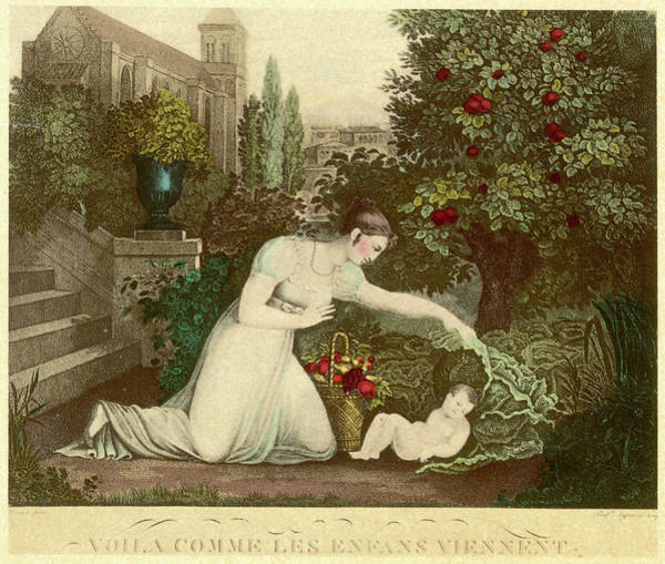 Folklore Drawing -  Finding A Baby Beneath A Cabbage Leaf by Mary Evans Picture Library
