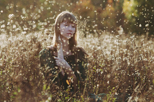 Autumn Flowers Photograph - *** by Ksenia Sinyavina