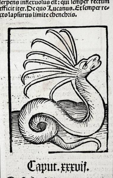 Behaviour Photograph - 1491 Cerastes Lure Snake Hortus Sanitatis by Paul D Stewart
