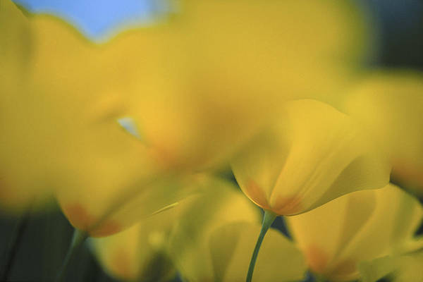 Wall Art - Photograph - A Close Up View Of Yellow Colored by Peter Essick