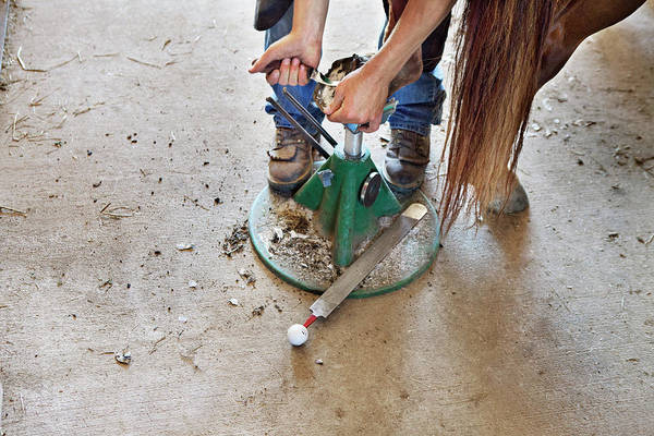 Farrier Photograph - A Farrier, Young Man, Trims The Hoof by Shana Wittenwyler
